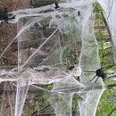 medium sized spiders