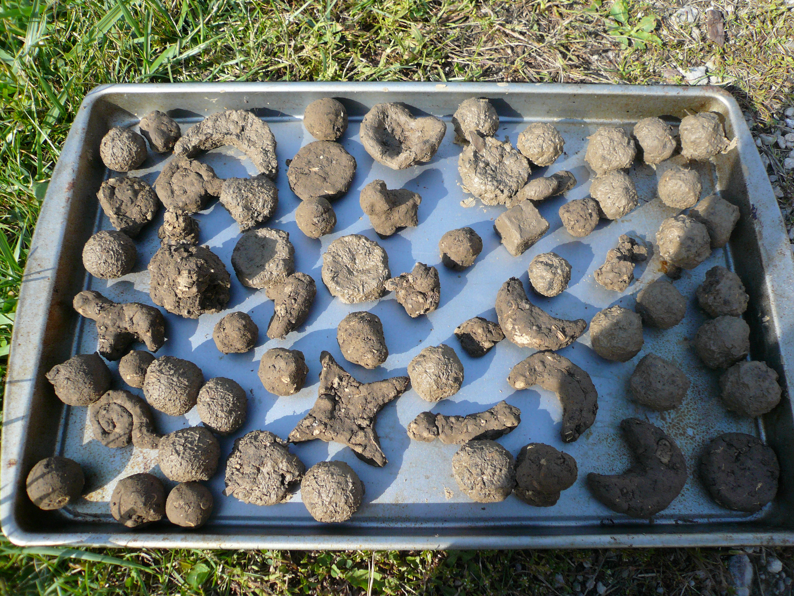 How to Make an Instant Garden Using Seed Balls