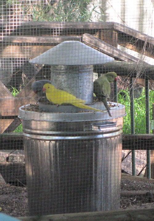 Spill Free & Rodent Controlling Bird Feeder