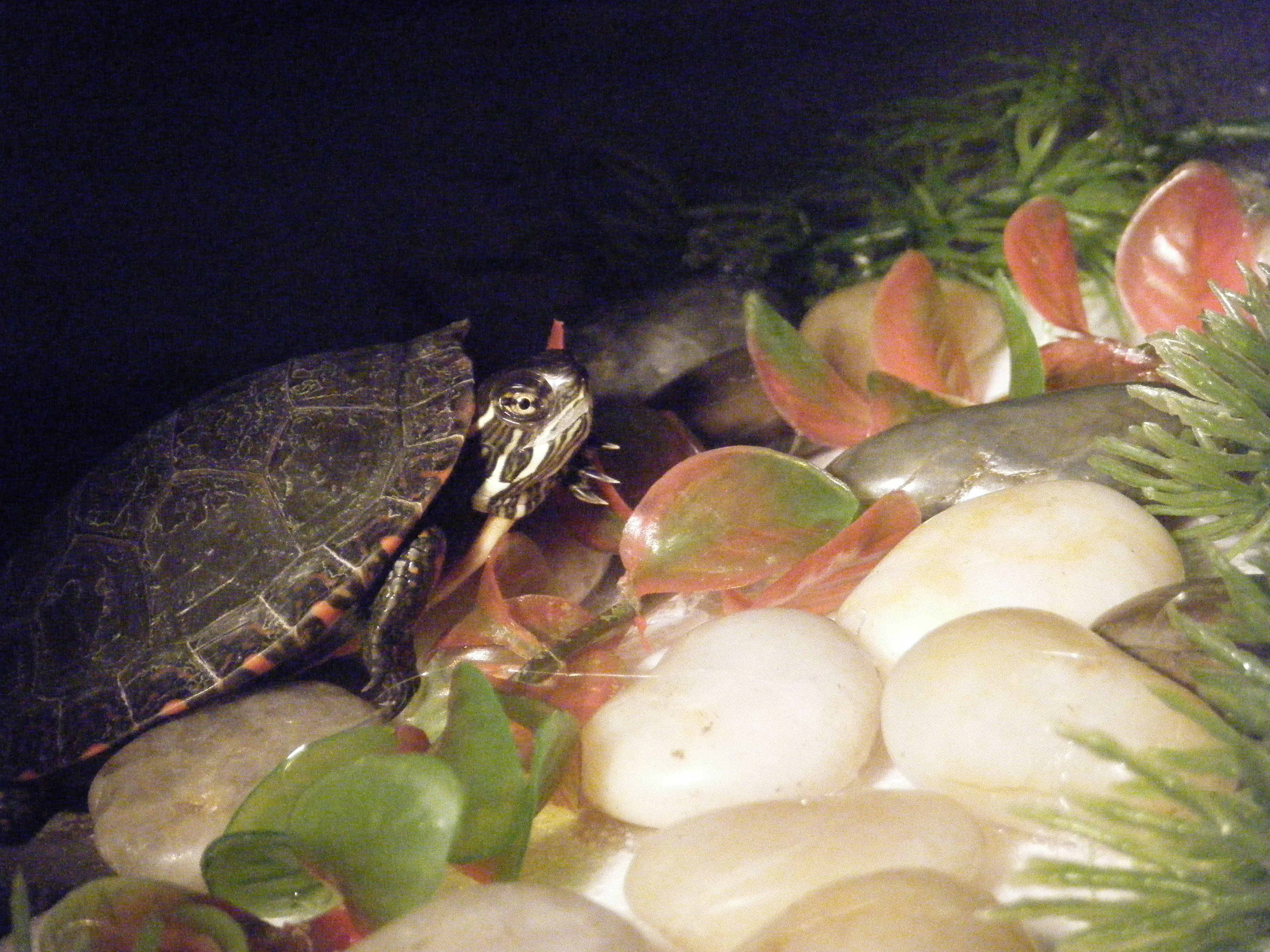Styrofoam turtle Dock