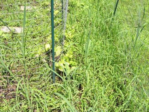 DIY Biodegradable Weedblocker
