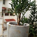 Cement Casted Vase