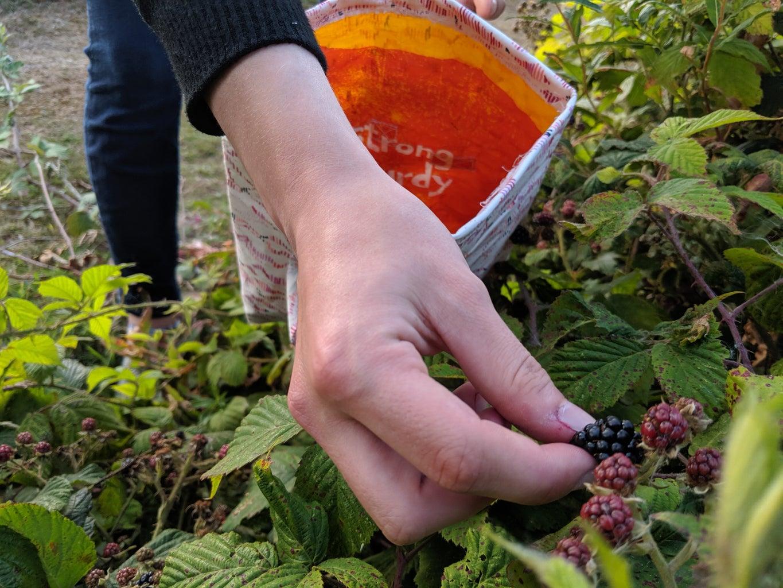 Blackberry-Picking Bag
