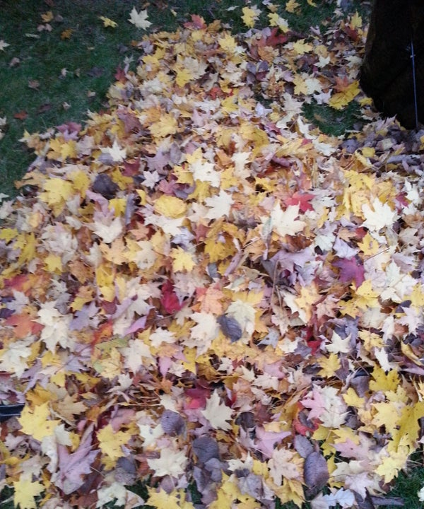 Saving the Bees Project: Insulating Beehives  Idea. Bagging Dry Leaves Efficiently.