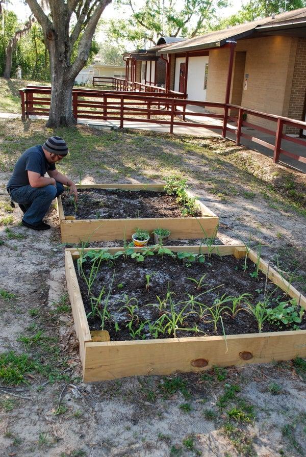 Veggie Gardens for Education