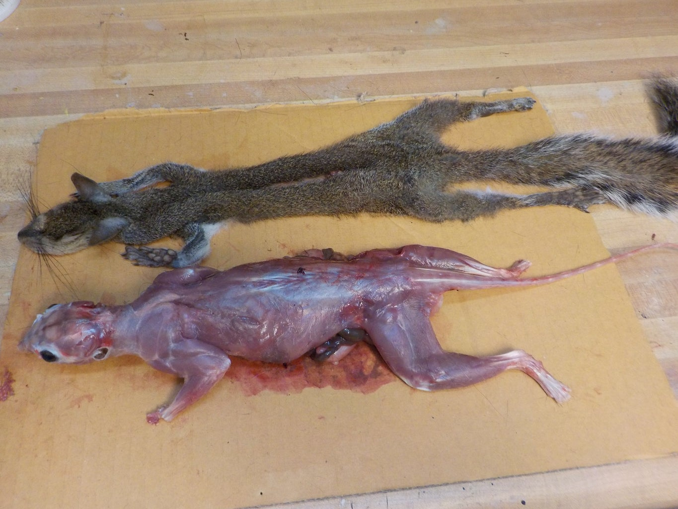 Skinning the Head - Eyes and Mouth