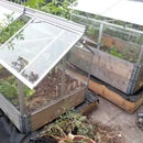 Self-watering Mini-greenhouse With Europallets