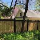 Backyard Bamboo Fence