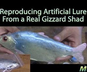 Make a Mold of a Real Fish!