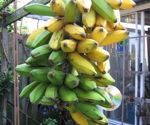 Green Banana French Fries