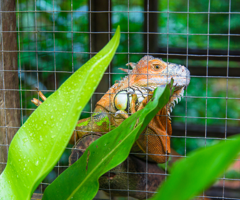 [Step by Step] How to Build an Iguana Cage