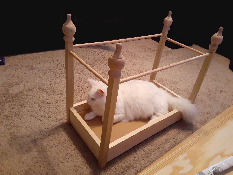 Cat Test