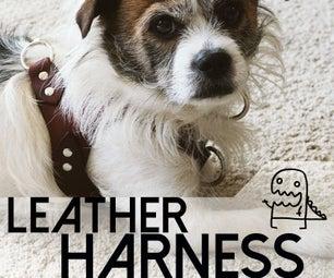Making a Custom Leather Dog Harness