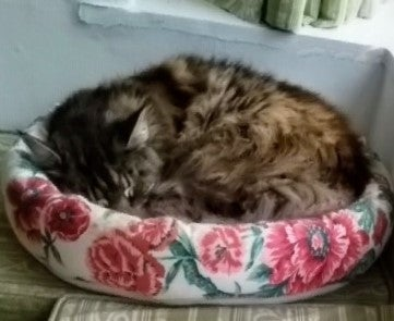 A Classy Cat Bed
