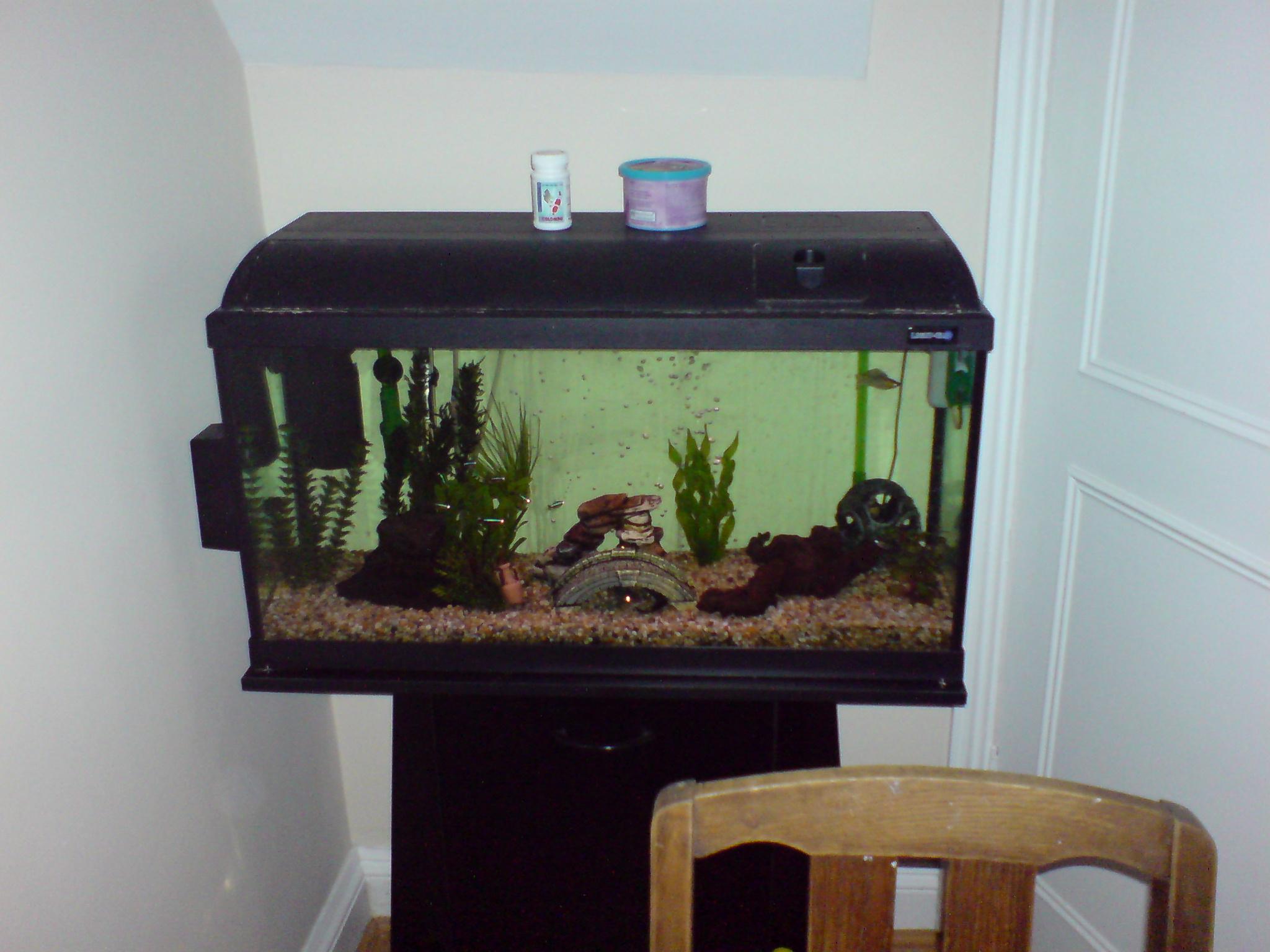 Making an online Fish Tank webcam!