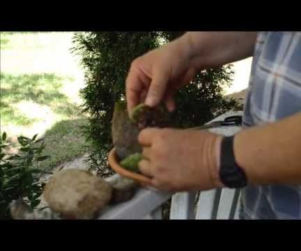 How to Make a Tabletop Moss Garden With Wild Moss