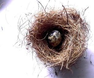 Make a Bird's Nest & Eggs (Slideshow)