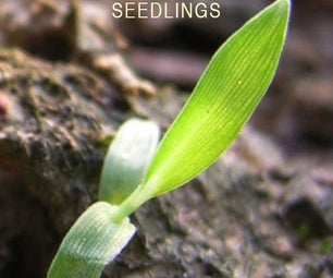 Transplanting Seeds