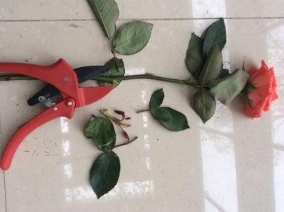 Make a Bouquet