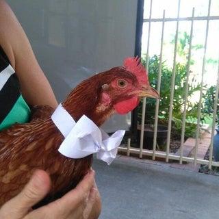 Chicken Bow Tie