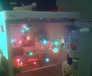 Happy Fridge Lights