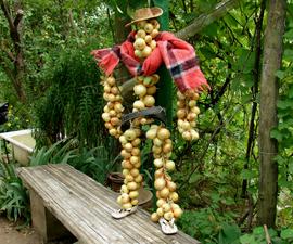 Onion Man (solar Dryer)