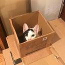 Cardboard Cat Box Surprise