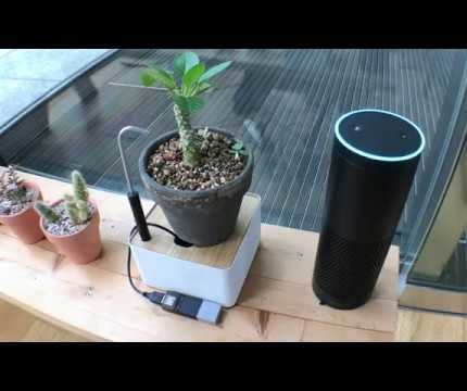 Self-Watering Plant Stand + Amazon Echo Made With MESH IoT Blocks