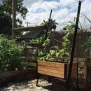 My $10 Reclaimed Climbing Vine Planter Box!