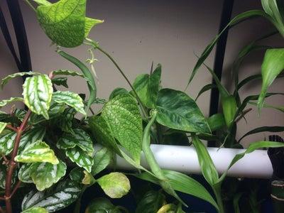 Plants: Herbs/vegetables