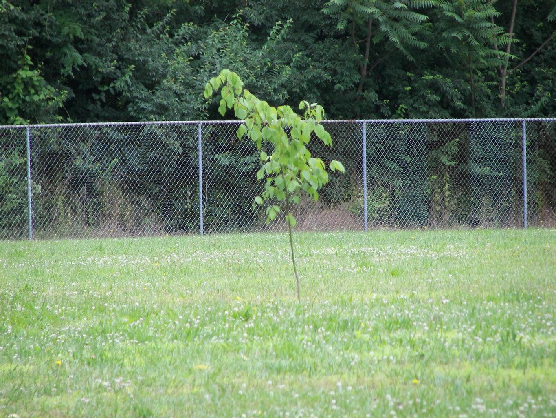 Guerilla Gardening: a Basic Guide