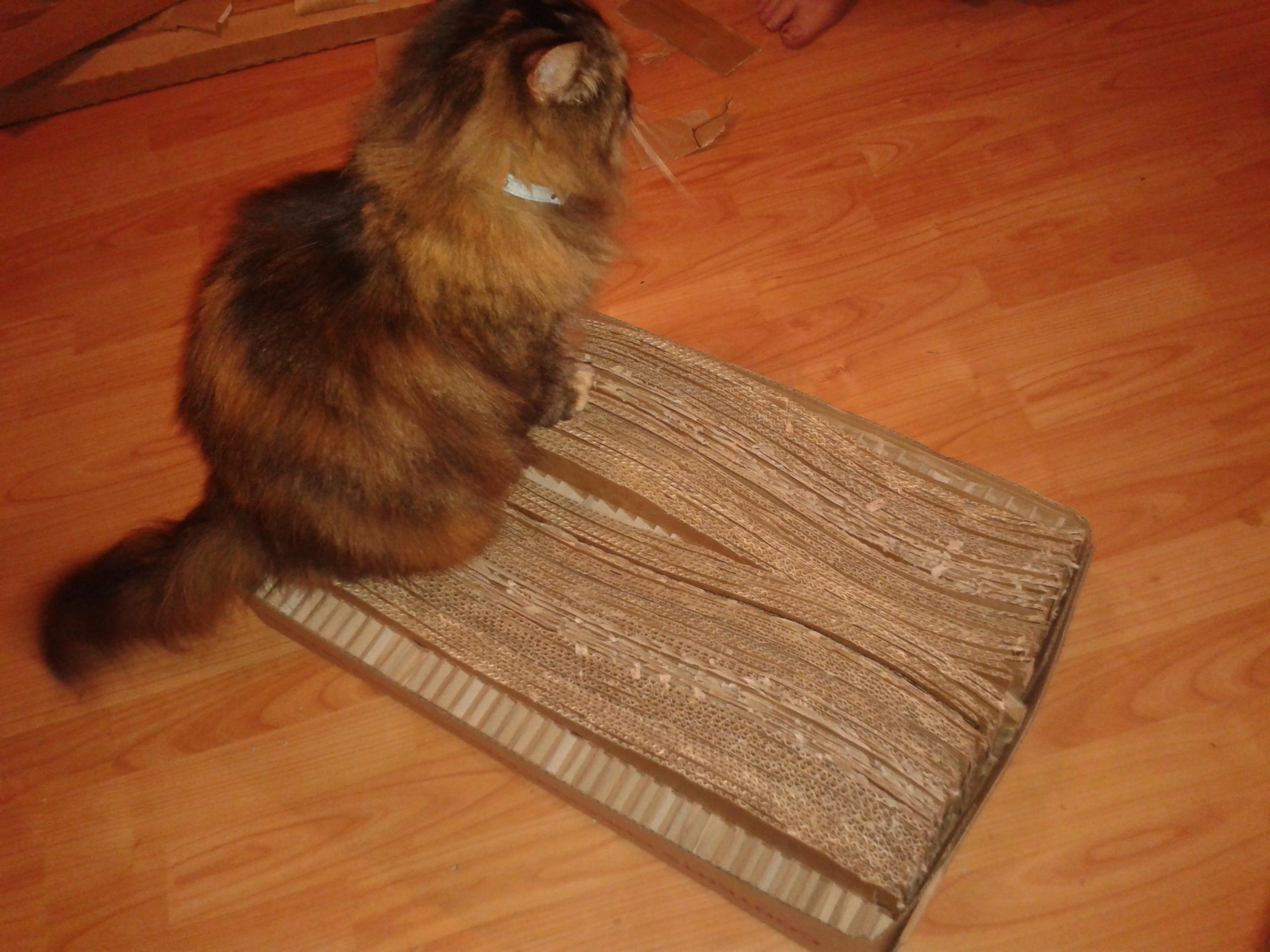 Cardboard cat bed scratcher