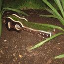 a guitar for the garden (planter)