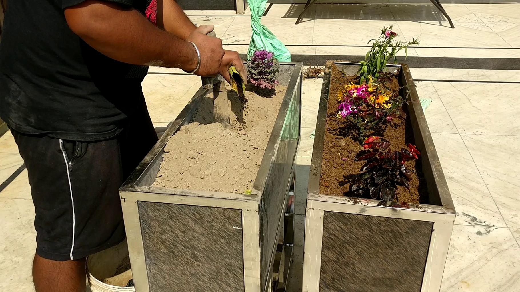 Plants Installation