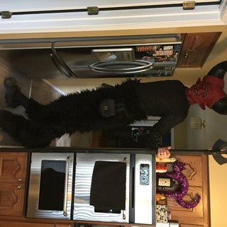Werewolf Stilts, Digitigrade Legs.