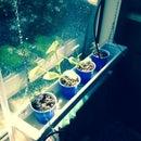 Window Hydroponics