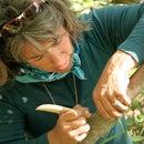 Harvesting Alder Bark