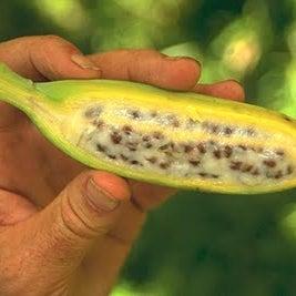 banana seed.jpg