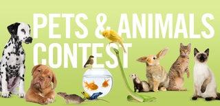 Animals Contest