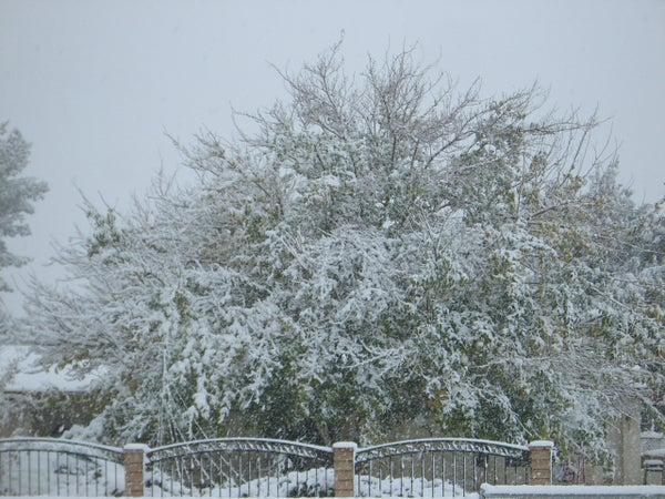Deb's Cold Winter Day Chili