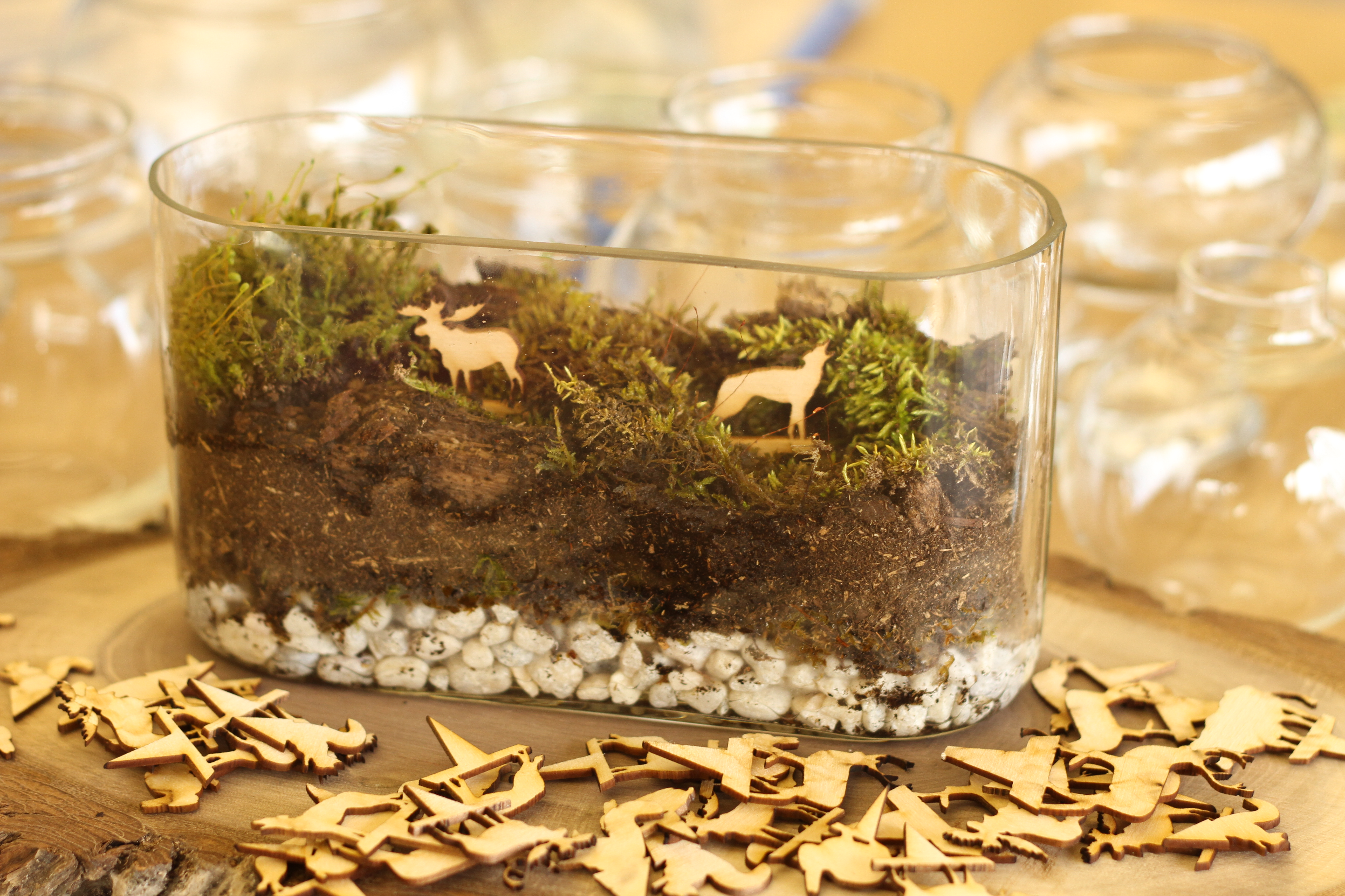 Terrarium with lasers! I made this at techshop!
