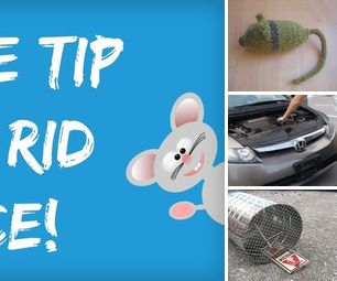 Tips on Getting Rid of Mice   Mouse Projects   All Things Mice