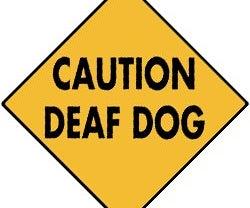 A Vibrating Deaf Dog Caller Collar <5$