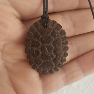 Turtle Shell From Coconut