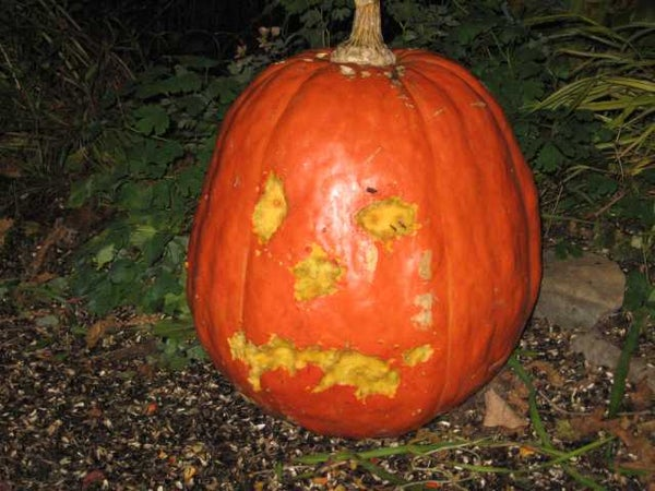 Self Carving Pumpkin