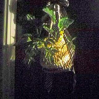 hanging plant.jpg