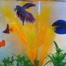 Colorful fish-tank backgrounds