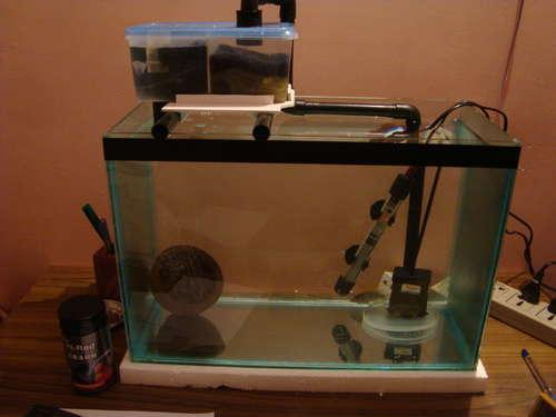 Diy Sump Filter for Aquariums