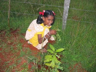 Planting the Saplings