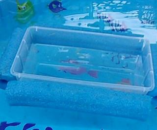 21个泳池面的不寻常用途